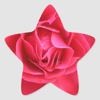 Gift with rose for Valentine's Day Star Sticker