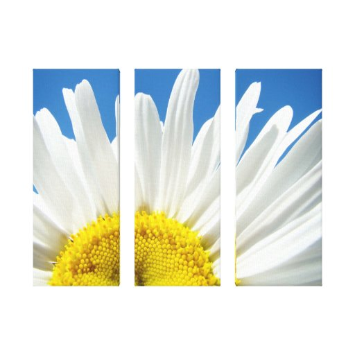 Gifts Holiday White Daisy Flower Canvas Prints
