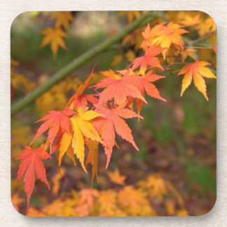 Gifts In Fall Colors Multiple Products Beverage Coaster