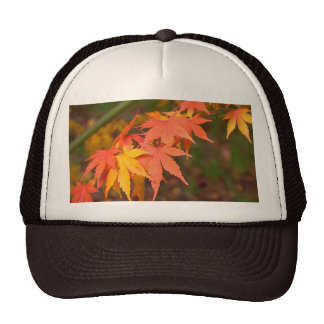 Gifts In Fall Colors Multiple Products Cap