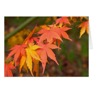 Gifts In Fall Colors Multiple Products Card
