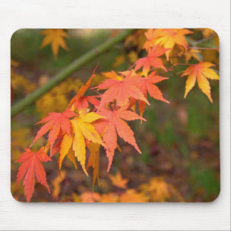 Gifts In Fall Colors Multiple Products Mouse Pad