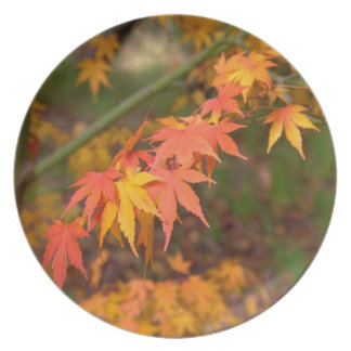 Gifts In Fall Colors Multiple Products Plates