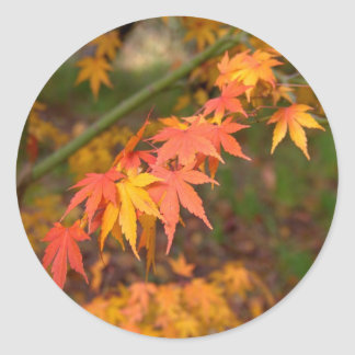 Gifts In Fall Colors Multiple Products Round Sticker