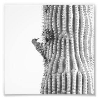 Gila Woodpecker on Saguaro | Photo Print