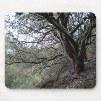 Gilroy Hot Springs - manzanita tree - mousepad