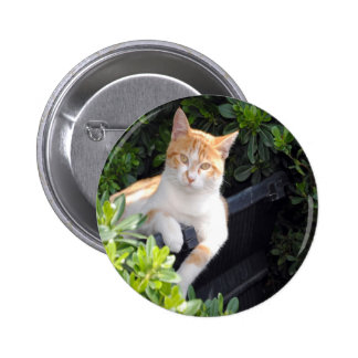 Ginger and White Cat Pinback Button