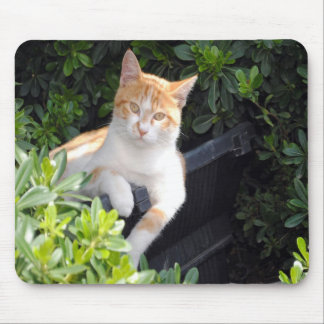 Ginger and White Cat Mouse Pad