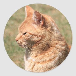 Ginger cat classic round sticker