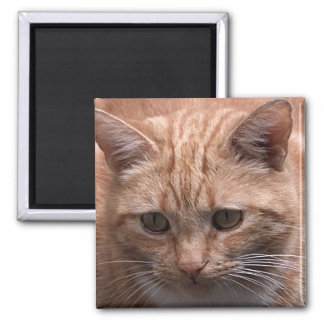 Ginger Cat Fridge Magnet