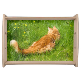 Ginger Cat In The Springtime Serving Tray