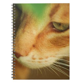 Ginger Cat Notebook