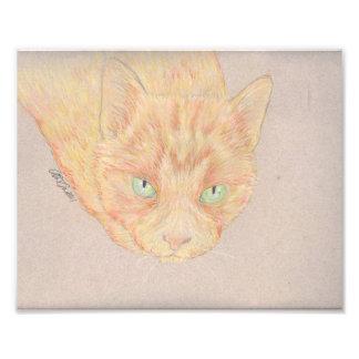 Ginger Cat Photo Art