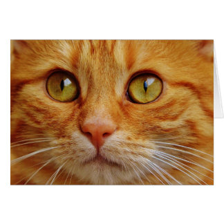 Ginger Cat Photo Card
