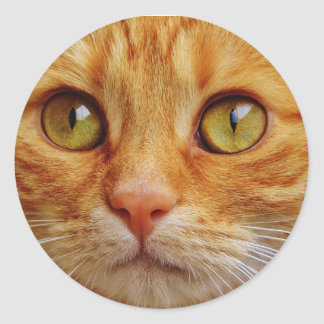 Ginger Cat Photo Classic Round Sticker