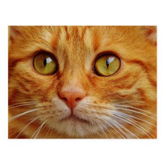 Ginger Cat Photo Postcard