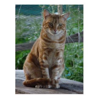 ginger cat postcard