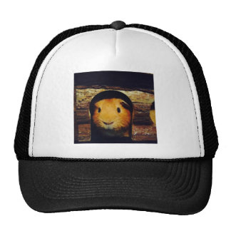 Ginger Guinea Pig Gifts Cap