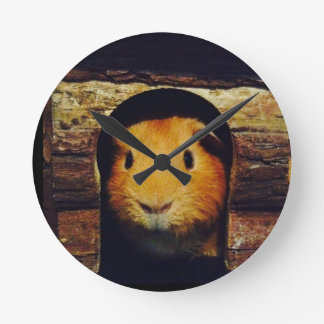 Ginger Guinea Pig Gifts Wall Clocks
