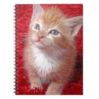 Ginger Kitten Notebooks