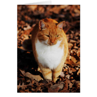 Ginger Tabby Cat Greeting Card