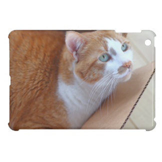 Ginger tabby in cardboard box iPad mini cases