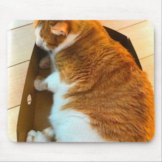 Ginger tabby in cardboard box mouse pad