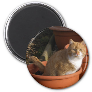 Ginger Tom Cat Magnet Magnets