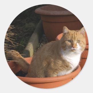 Ginger Tom Cat Sticker