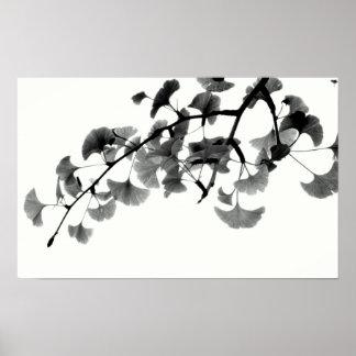 Gingko Biloba Foliage in Black and White Poster