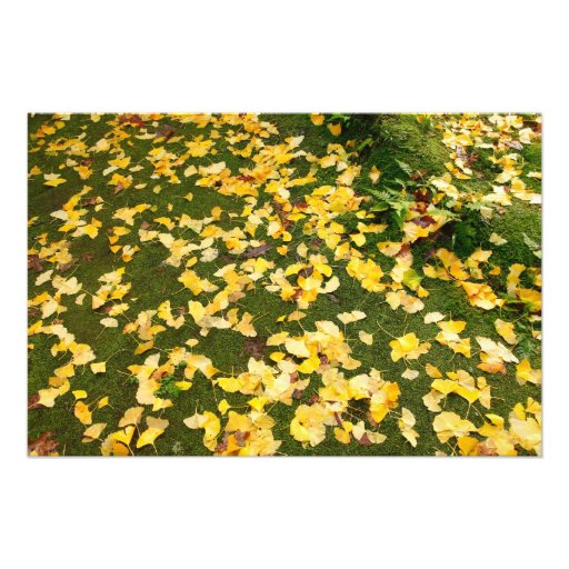 Ginkgo biloba leaves photo art