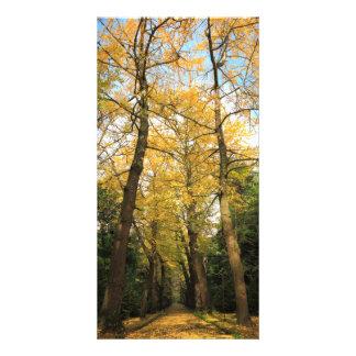 Ginkgo biloba trees card