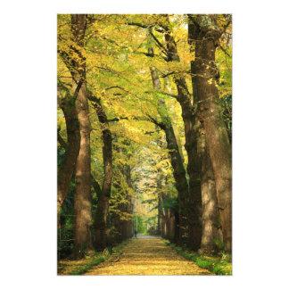 Ginkgo Biloba trees Photo