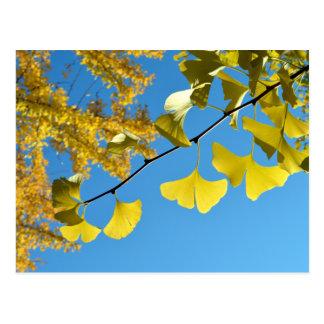 Ginkgo Leaves in Autumn Postcard