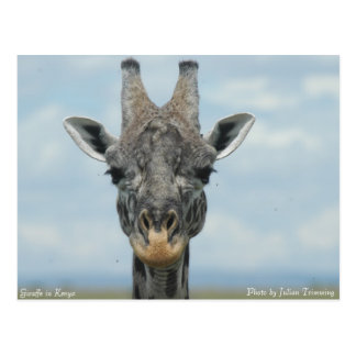 Girafe in Kenya Postcard