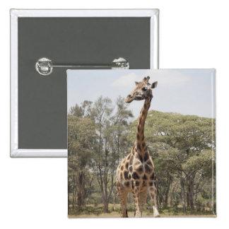 Giraffe 5 15 cm square badge
