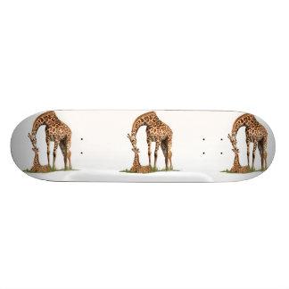 Giraffe and baby calf kissing skate board