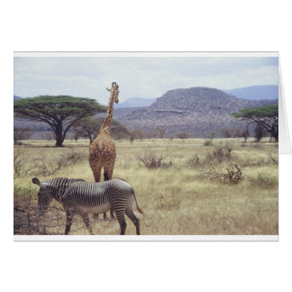 Giraffe and Zebra blank card