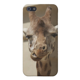Giraffe Antwerp Zoo Cover For iPhone 5/5S