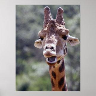 Giraffe Closeup Poster
