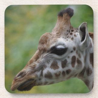Giraffe Coasters