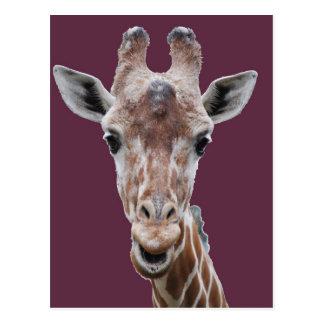 giraffe cutout plum post cards