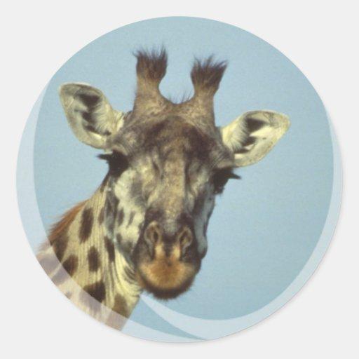 Giraffe Design  Stickers
