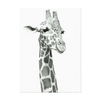 Giraffe Drawing Stretched Canvas Print