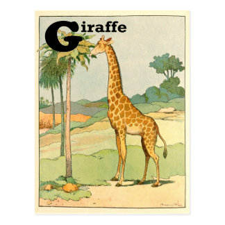 Giraffe Eating Acacia in the Desert Postcard