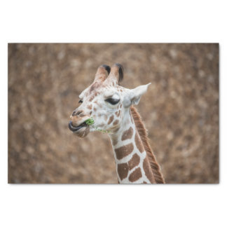 Giraffe Eating Grass Tissue Paper