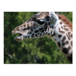 Giraffe Eating Postcard