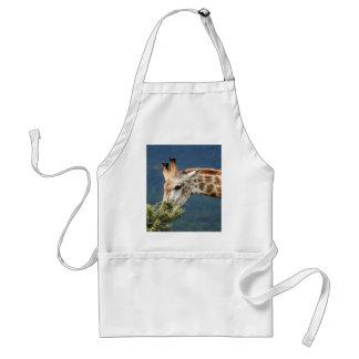 Giraffe eating some leaves standard apron
