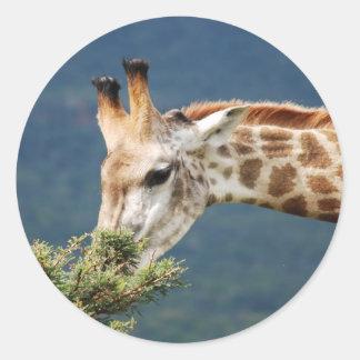 Giraffe eating some leaves sticker