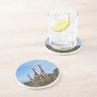 Giraffe Family Drink Coasters